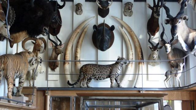 museo della caccia e della natura a parigi informazioni turistiche ed orari di apertura. Black Bedroom Furniture Sets. Home Design Ideas