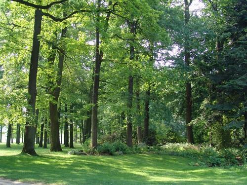 Bosco di Vincennes, la più vasta area verde di Parigi. Informazioni utili