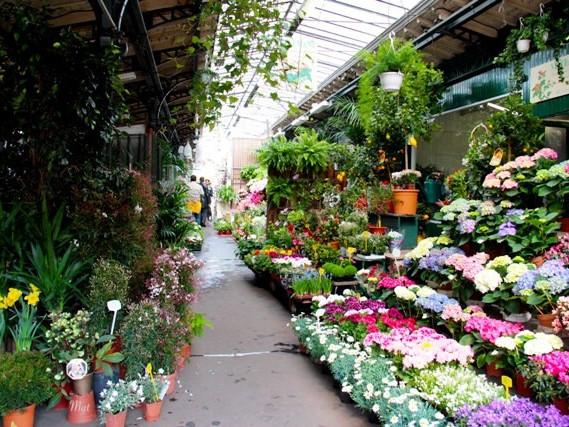 Mercatini di Parigi: Mercato dei fiori e degli uccelli di Place Louis Lépine