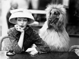 Parigi con i cani: consigli e suggerimenti per la tua vacanza a Parigi con un cane