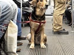 Prendere la metro a Parigi con un cane - come fare e cosa sapere a riguardo i trasporti