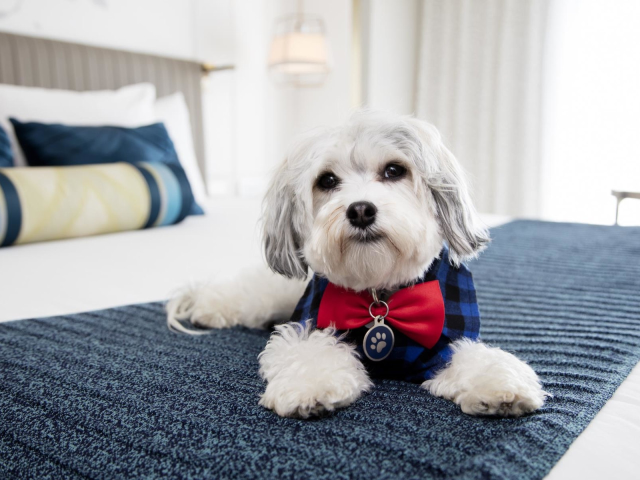 Hotel Pet Friendly che accettano animali a Parigi - Parigi.it